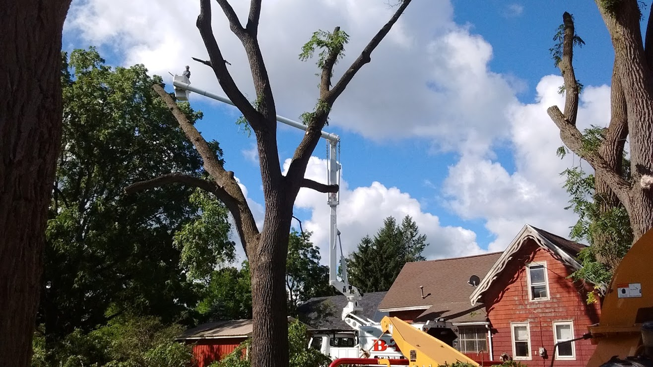 Northeast PA Tree Trimming & Removal Services