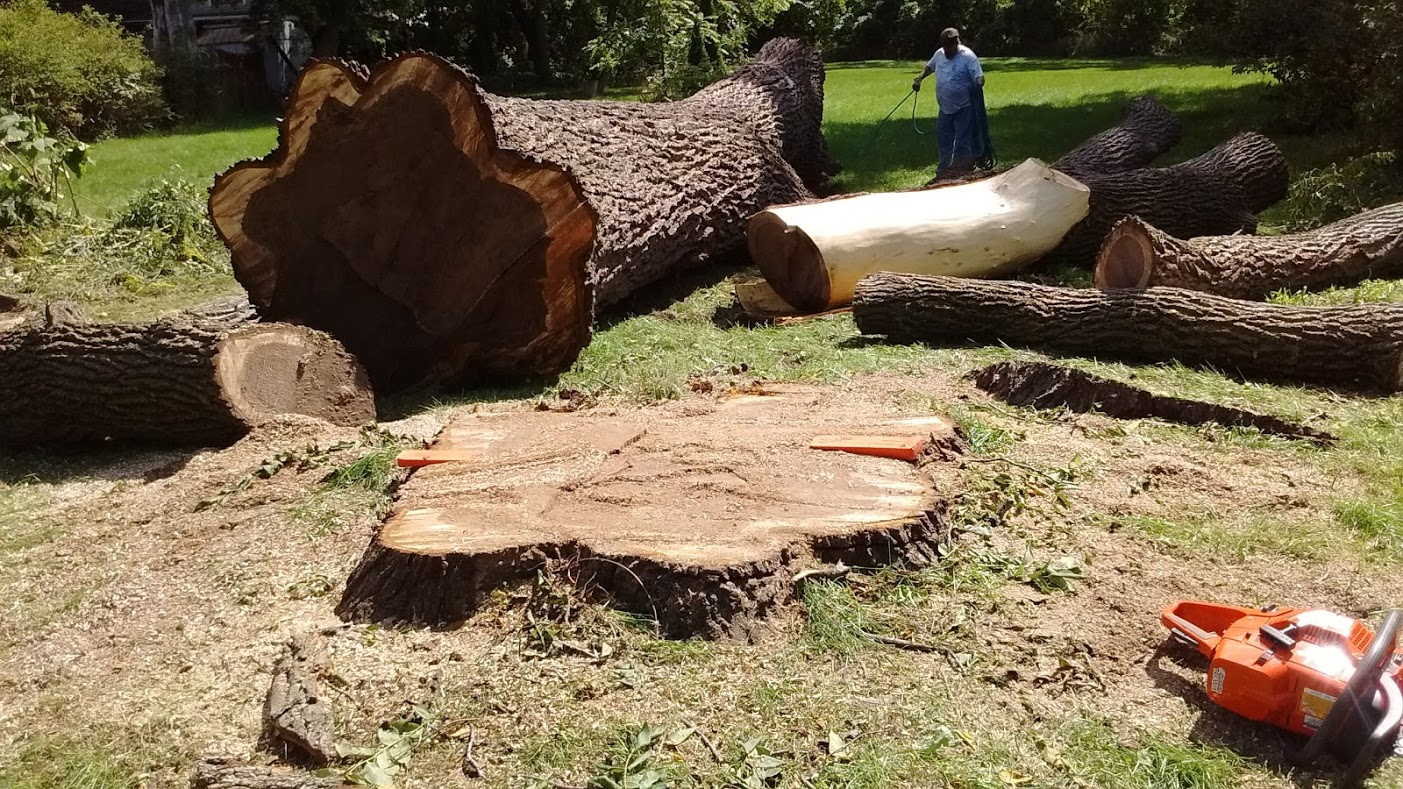 Scranton/Wilkes Barre Tree Removal & Cutting Services